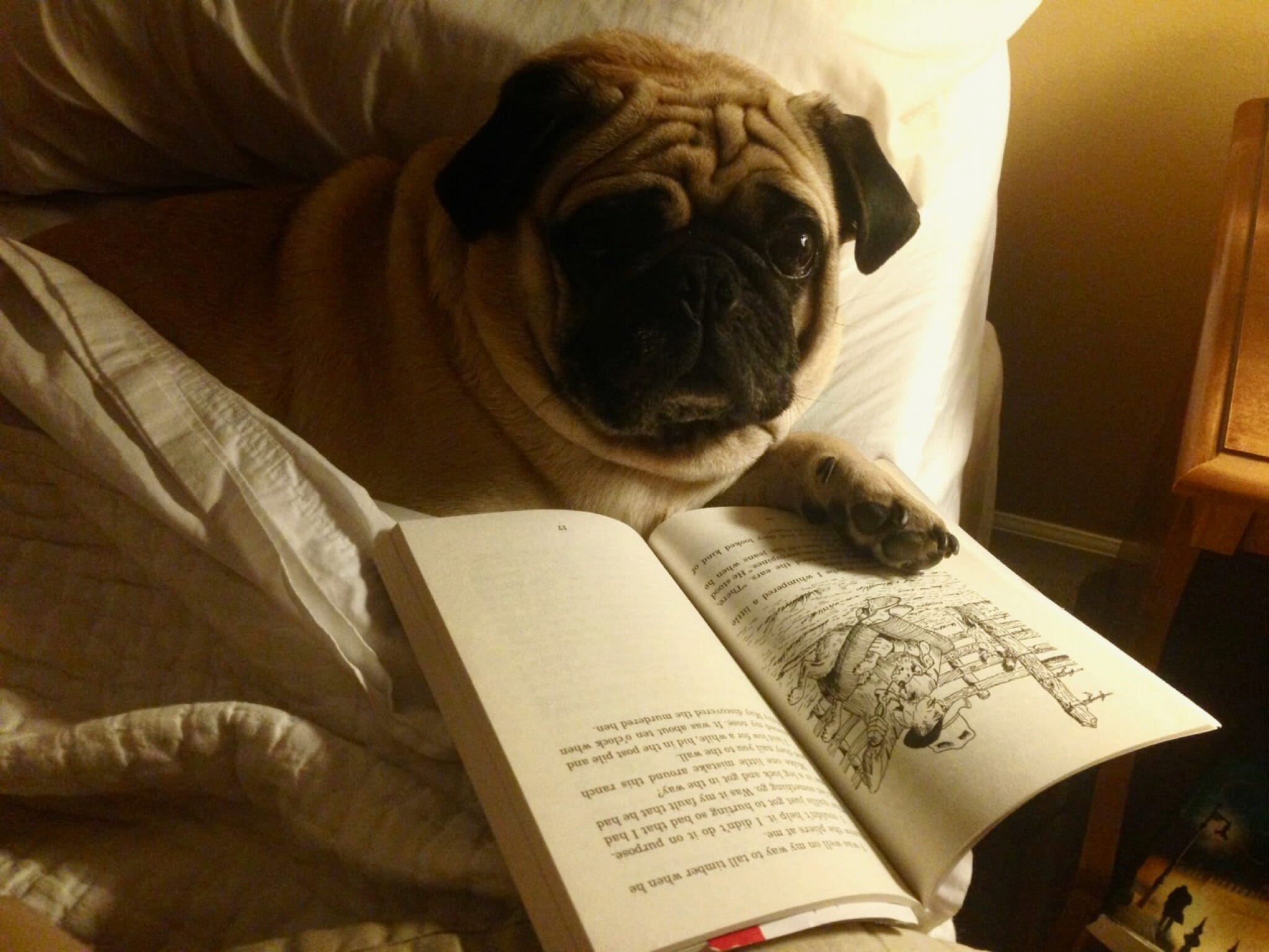 Phoggy Pug reading