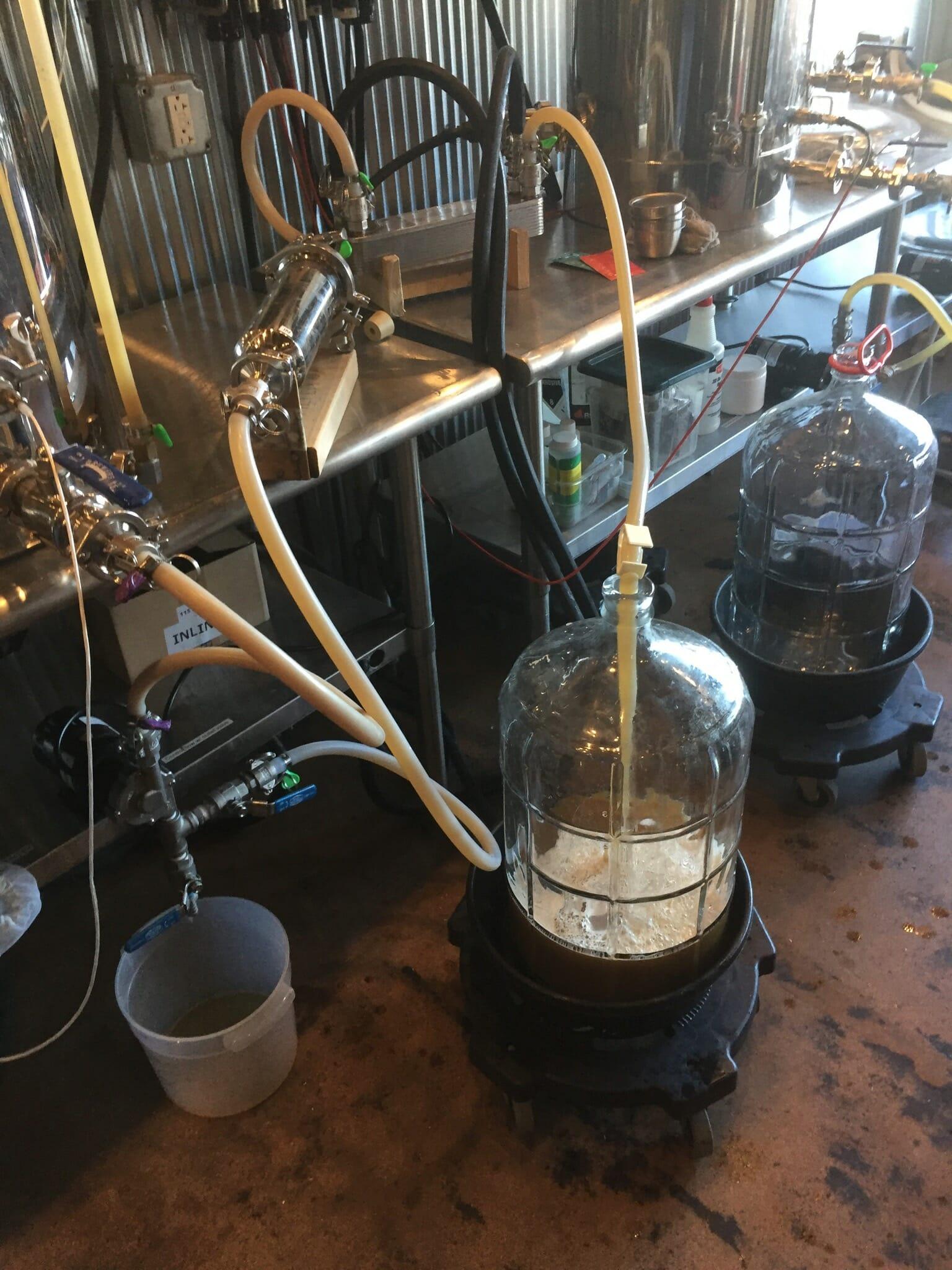 Beer ferment